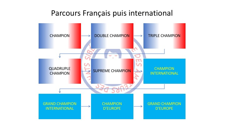 Cursus France International